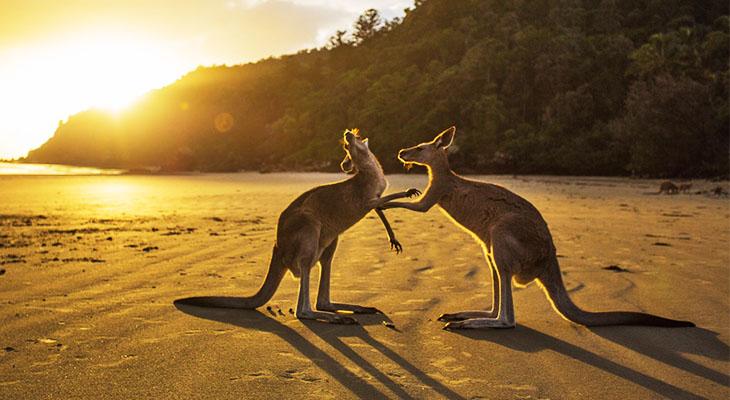 Best Web Hosting Services for Australia
